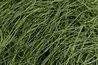 Сизаль зеленый оливковый