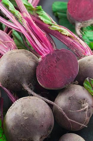 Свекла Бебібіт 200 семян (Рійк Цваан) ТМ Добрі Сходи, фото 2