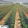 Плівка для мульчування POLITIV (Ізраїль), фото 3
