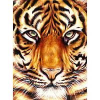 "Картина по номерам ""Сила тигра"" 30х40 см"