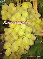 Карабурну (Афуз Али,Болгар,Алеппо)