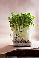 Бизнес на проращивании ростков фасоли SproutNet