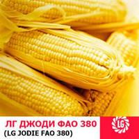 Семена кукурузы Джоди (Limagrain/Лимагрейн)