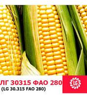 Семена кукурузы ЛГ30315 (Limagrain/Лимагрейн)