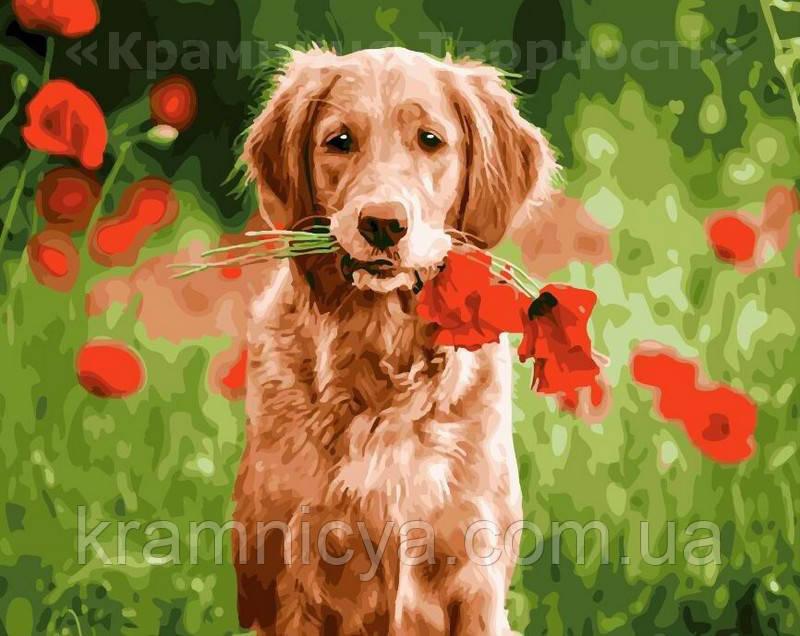 Картина за номерами 40х50 Квіти від одного (GX21746)