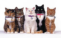 Ошейники, Поводки, Шлеи для кошек