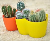Вазон Кактусник на 3 растения