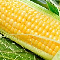 Любава 279 МВ кукурудза кормова Насіння України 0,5 кг