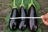 Семена баклажана Фабина F1 / Fabina F1 F1 5 грамм Clause