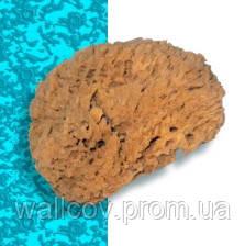 Натуральная морская губка Natural Coral Effect. 210 мм.