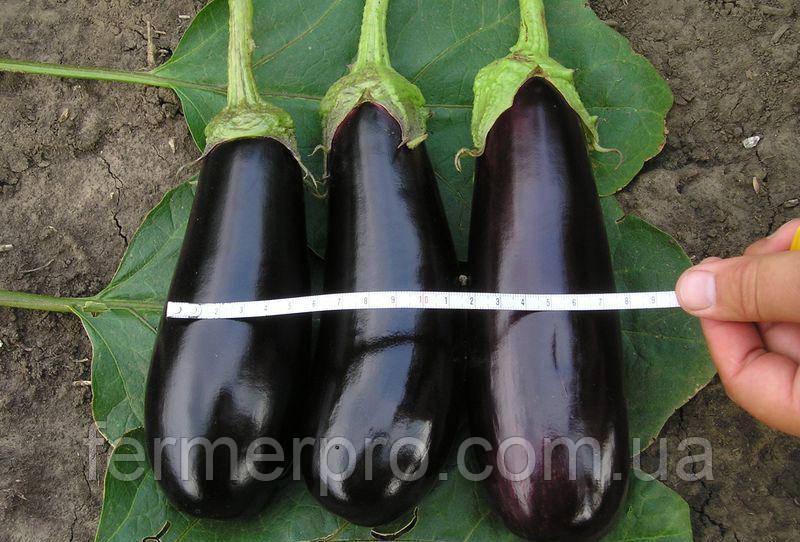 Семена баклажана Фабина F1 / Fabina F1 F1 50 грамм Clause