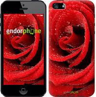 "Чехол на iPhone 5s Красная роза ""529c-21-8545"""