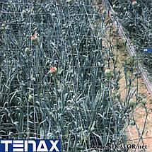 Шпалерна квіткова сітка Tenax HORTINET 10FGPO (Італія), фото 3