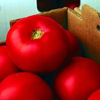 Семена томата Флорида 47 F1 ( Florida 47 F1 )