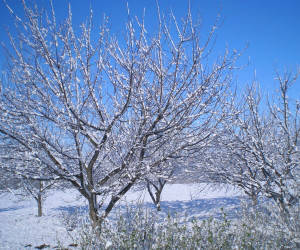 Зимові роботи