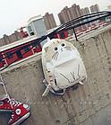 Рюкзак детский подростковый Кот с ушками и хвостиком, фото 9
