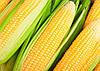 Семена кукурузы Харди F1 5000сем. Pop Vriend Seeds