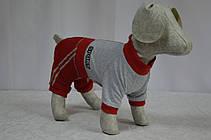 Комбинезон для собак Спорт, фото 3