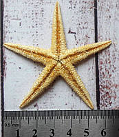 Декор ракушка морская звезда 6-7 см