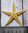 Ракушка морская звезда 5-6 см, фото 2