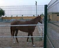 Ограждение (забор) Ø 4,0мм (550х2500мм) Оригинал Фрунзе