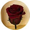 Вечные розы Багровый гранат, фото 2