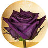Вечные розы Фиолетовый аметист, фото 2