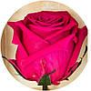 Долгосвежие розы Малиновый родолит, фото 2