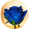"""Вечные розы Синий сапфир """"3 розы"""", фото 2"""
