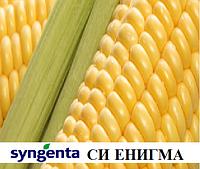 Семена кукурузы СИ Энигма укр. Форс Зеа ФАО 230 (Syngenta/Сингента)