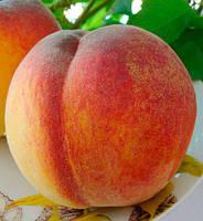 Саджанці персика Вулкан Т-1