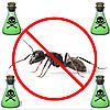 Вывести муравьев. Запорожье