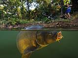 Леска рыболовная 1000 метров, Carp Expert, ВЕНГРИЯ 0.35mm, радуга, товары для рыбалки , фото 2
