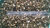 Aquarium Plus - грунт для аквариума галька речная 4-6 мм 10 кг