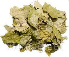 Смородина лист 50 гр. ПТ