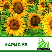 Семена подсолнечника  Нарис 55 A–H