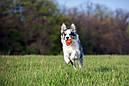Liker Cord 5 - м'ячик зі шнуром для цуценят і собак дрібних порід, фото 5