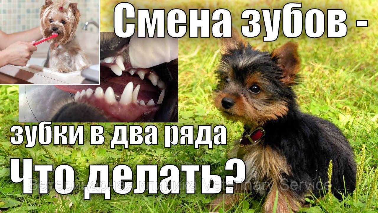Удаление молочных зубов (1 зуб): премоляр