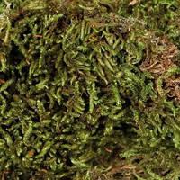 Наполнитель мох сфагнум для террариума 100 г Трикси