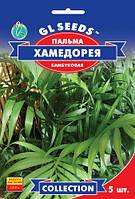 Насіння ПАЛЬМА бамбукова Хамедорея 5 шт