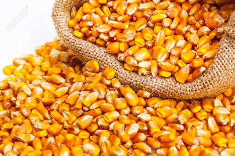 Кукуруза для попкорна 1 кг
