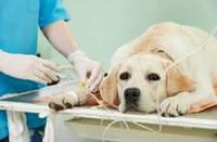 Внутривенная инфузионная терапия (Капельница)