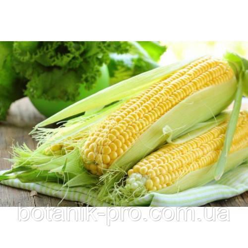 Семена кукуруза Вилия
