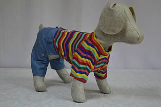 Комбинезон для собак Сюрприз