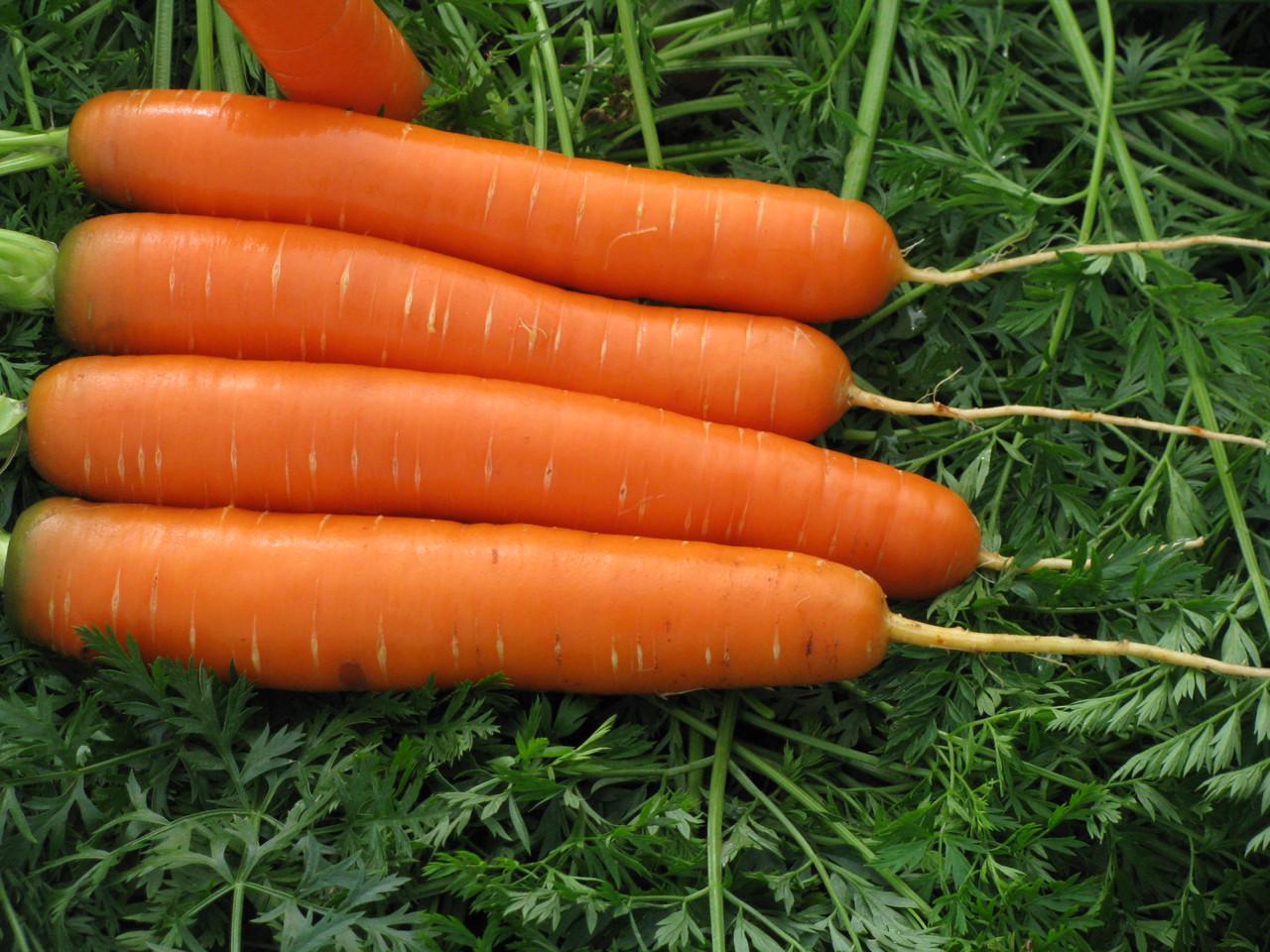 семена овощей для теплицы