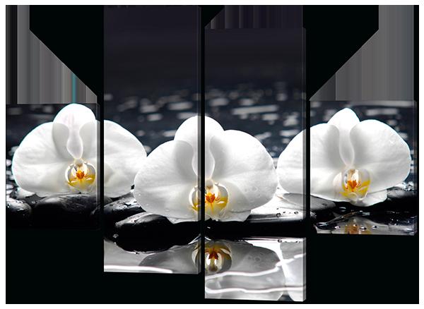 Модульная картина Белые цветки орхидеи