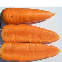 ШАНТАНЕ - семена моркови, CLAUSE