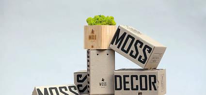 Экосувениры Moss Cube