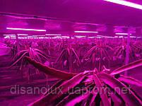 Фитолампа для рослин T8 Led 16W 4RED 2BLUE G13 1200mm 230V, фото 3