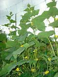 Сітка пластикова Шпалерна 1,7*10м зелена Конюшина, фото 5